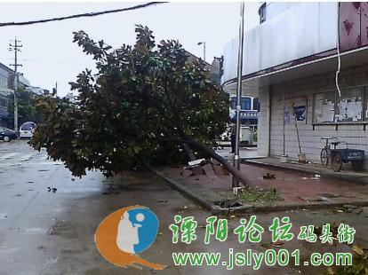 溧阳范围内受台风影响最大的地方   是在溧阳盛世华城发生的高清图片