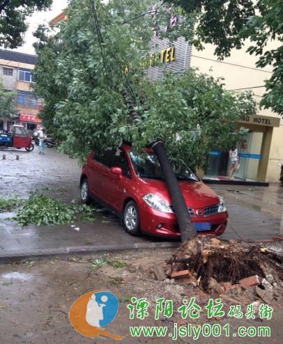 是在溧阳盛世华城发生的惨状啊!连根拔起的树倒就倒吧,还压高清图片