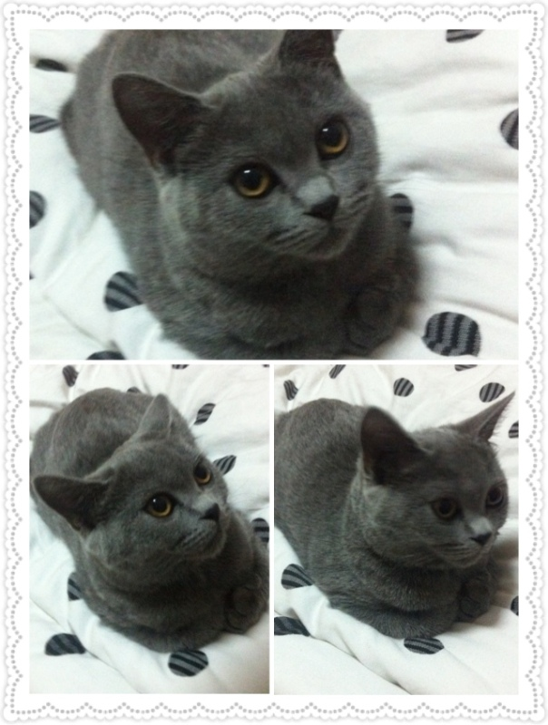 我买的英短蓝猫 两个月多点了 有奶藓 结痂了 现在掉了好大一块毛和痂