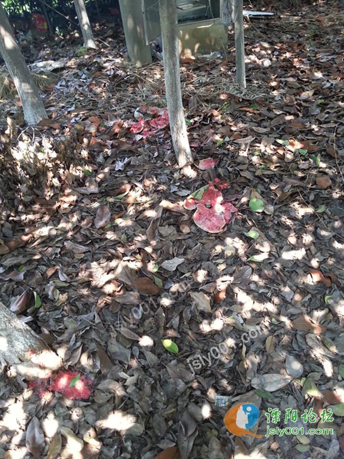 溧阳盛世华城旁,绿树荫变垃圾场 高清图片