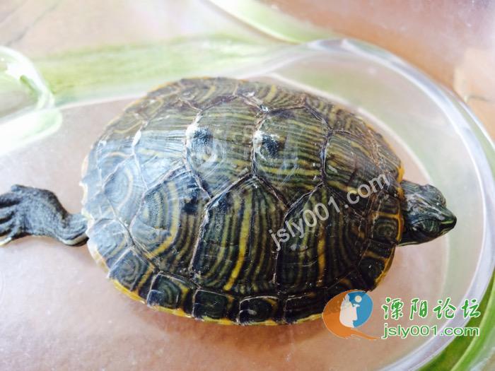 这乌龟是不是冬眠了