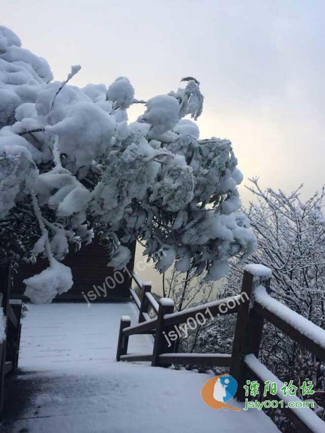 美到极致的溧阳南山竹海雪景!