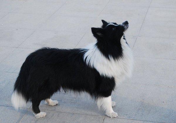 单个动物大头素描黑白图片