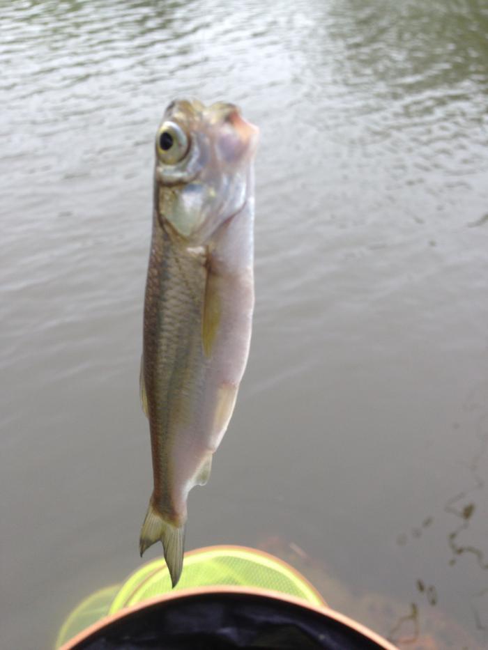 惊现奇怪的鱼图片