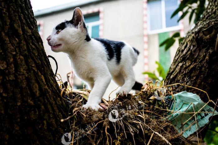 可爱的小猫咪(二)