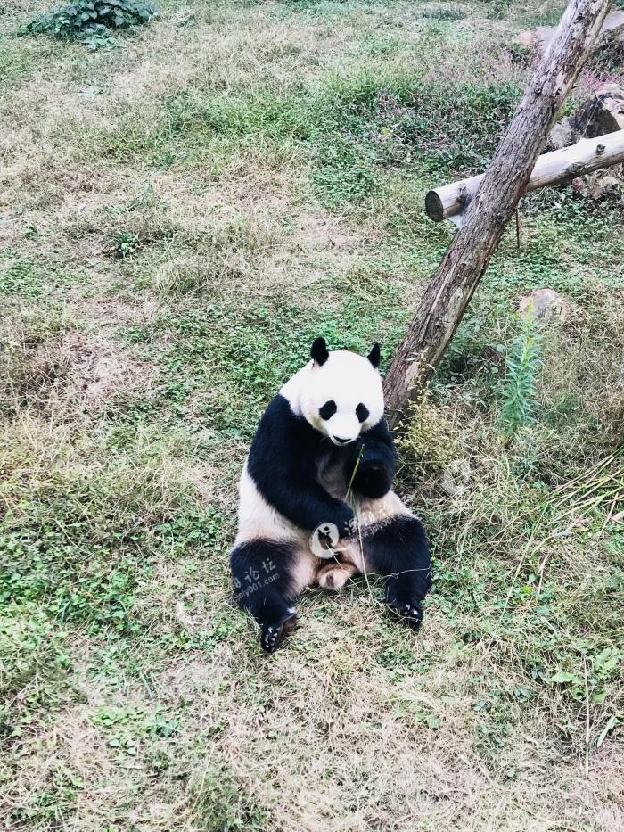 去溧阳南山竹海,赏秋看熊猫卖萌!